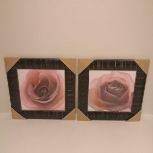 cuadro de rosas huesca