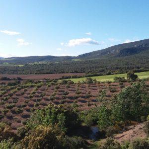 Trufa fresca Huesca